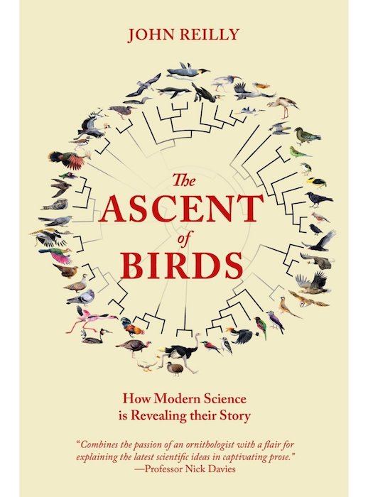 Ascent of Birds