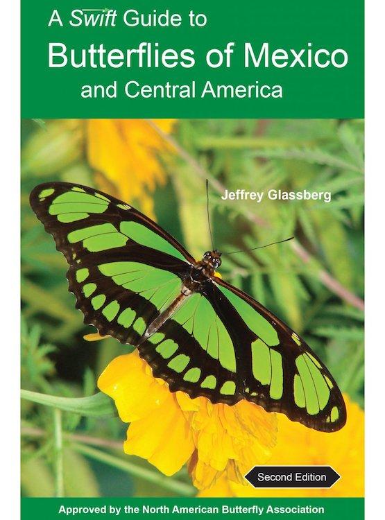 Mexican Butterflies